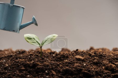 Photo for Toy watering can near green plant isolated on grey - Royalty Free Image
