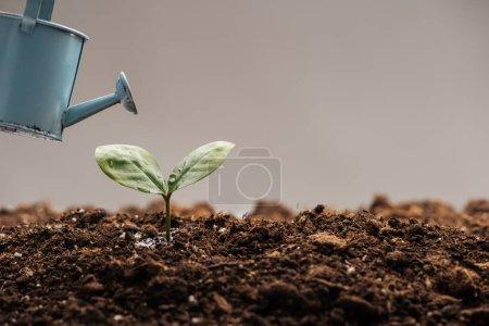 Photo pour Arrosoir jouet près de petite plante verte isolée sur gris - image libre de droit