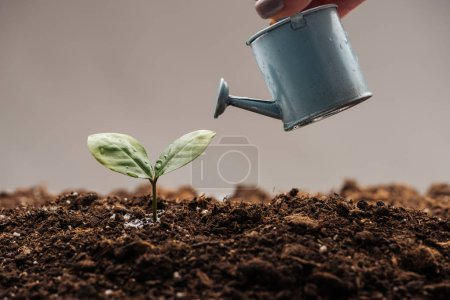 Photo for Cropped view of couple holding watering can neat small plant isolated on white - Royalty Free Image