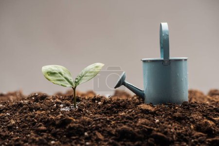 Photo for Toy watering can standing near green plant isolated on grey - Royalty Free Image
