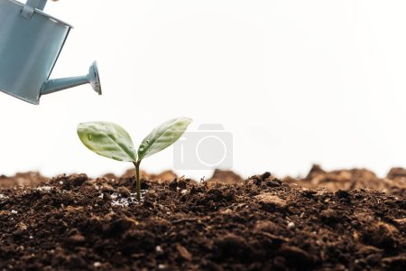 Photo for Toy watering can near green plant isolated on white - Royalty Free Image