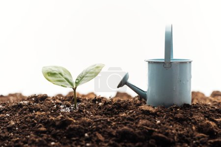 Photo for Toy watering can near small green plant isolated on white - Royalty Free Image