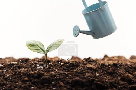 Photo for Toy watering can near small plant in ground isolated on white - Royalty Free Image
