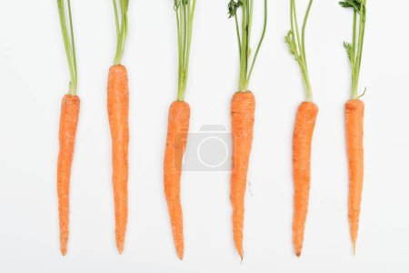 Photo for Top view of fresh ripe raw whole carrots arranged in row isolated on white - Royalty Free Image