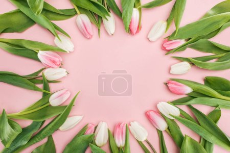 top view of spring tulips in circle frame isolated on pink
