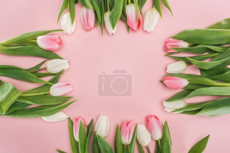 frame of pink spring tulips isolated on pink