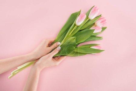 Photo pour Vue recadrée de femme tenant tulipes printemps isolés sur Rose - image libre de droit