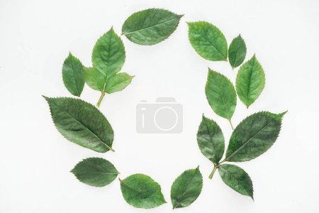 Photo for Top view of circular composition with green leaves isolated on white - Royalty Free Image