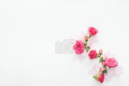 Photo for Top view of composition with roses buds, berries and petals isolated on white - Royalty Free Image