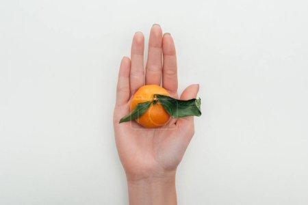vue partielle de la femme tenant toute la mandarine lumineuse à la main sur fond blanc