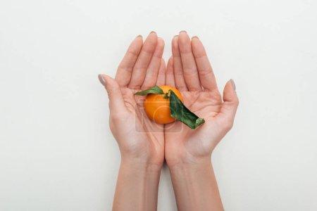 Photo pour Recadrée vue de femme tenant mandarine aux feuilles vertes en mains sur fond blanc - image libre de droit