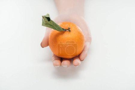 Photo pour Recadrée vue de femme tenant mûr entières non Pelée mandarine avec feuilles sur fond blanc - image libre de droit