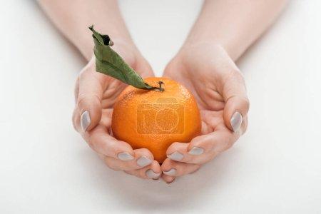 Photo pour Vue partielle de la femme tenant mûr entières non Pelée mandarine avec feuilles sur fond blanc - image libre de droit