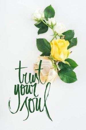 Photo pour Vue de dessus de composition de roses sur blanc fond avec confiance votre lettrage de l'âme - image libre de droit