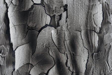 Photo for Cracked barren land surface, global warming concept - Royalty Free Image