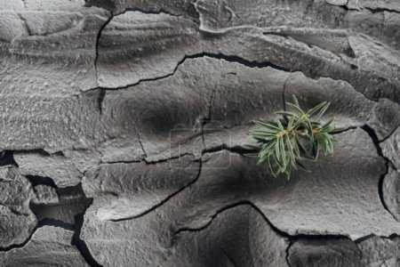 Photo for Dried cracked ground surface with young green plants, global warming concept - Royalty Free Image