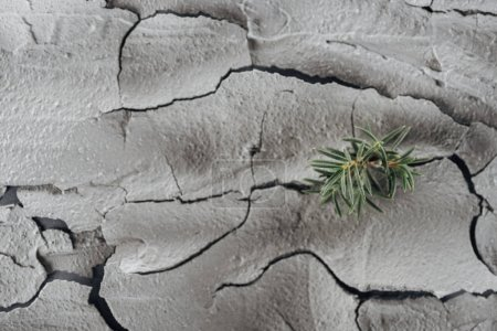 Photo for Young green plants on cracked land surface, global warming concept - Royalty Free Image