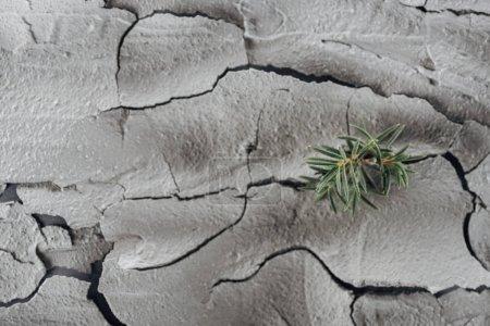 Photo pour Jeunes plantes vertes sur le sol fissuré, concept de réchauffement global - image libre de droit