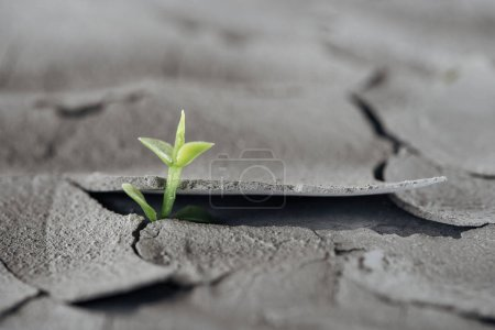 selective focus of young green plant on cracked ground surface, global warming concept