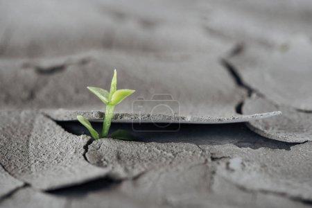 foyer sélectif de la jeune plante verte sur la surface fissurée du sol, concept de réchauffement climatique