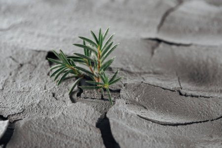 Photo for Selective focus of young green plants on barren ground surface, global warming concept - Royalty Free Image
