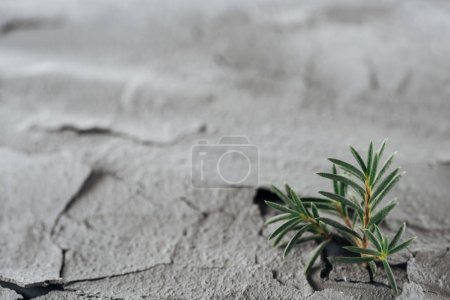 Photo for Selective focus of young green plants on dried cracked land surface, global warming concept - Royalty Free Image