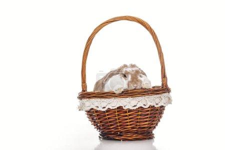 Photo pour Mignon lapin de Pâques assis dans le panier en osier sur blanc - image libre de droit