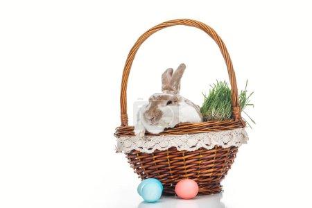 Photo pour Oeufs de Pâques traditionnels près du panier en osier avec lapin mignon et herbe sur blanc - image libre de droit