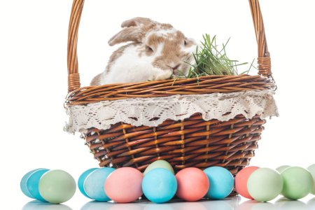 Photo for Colorful easter eggs near wicker basket with bunny and grass on white - Royalty Free Image
