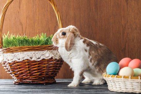 Photo pour Mignon lapin près du bol avec des œufs de Pâques et panier en osier avec de l'herbe sur la table en bois - image libre de droit
