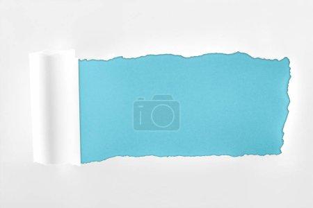 Photo pour Papier blanc texturé déchiré avec bord roulé sur fond bleu - image libre de droit