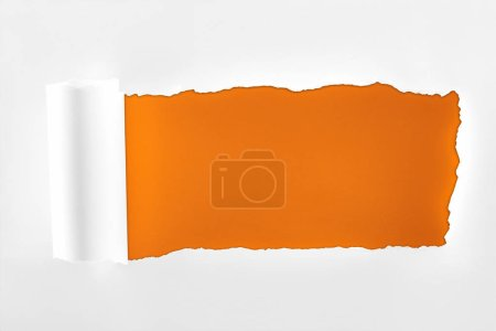 Photo for Tattered textured white paper with rolled edge on orange background - Royalty Free Image