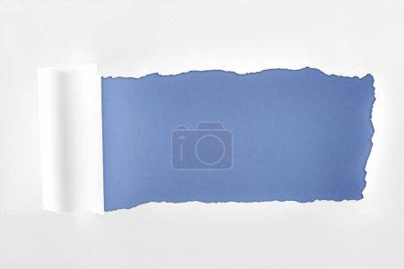Photo pour Papier blanc texturé lambeaux avec bord roulé sur fond bleu - image libre de droit
