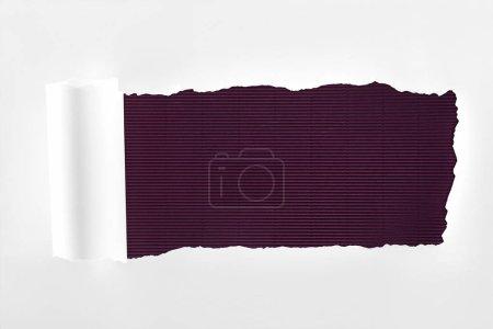 Photo pour Papier blanc texturé lambeaux avec bord roulé sur fond violet - image libre de droit