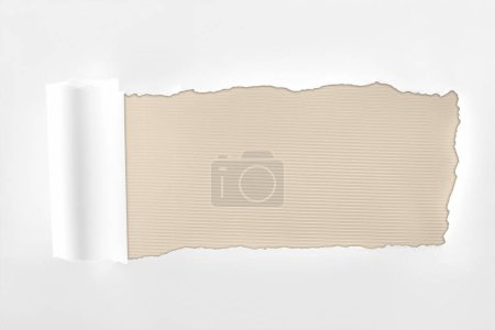 Photo for Tattered textured white paper with rolled edge on ivory background - Royalty Free Image