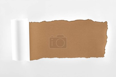 Photo for Tattered textured white paper with rolled edge on brown background - Royalty Free Image