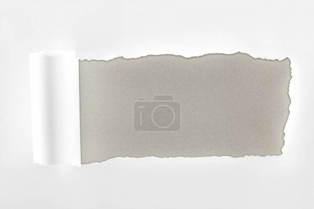 Photo for Tattered textured white paper with rolled edge on grey background - Royalty Free Image