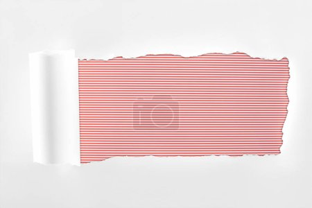 Photo for Ragged textured white paper with rolled edge on red striped background - Royalty Free Image