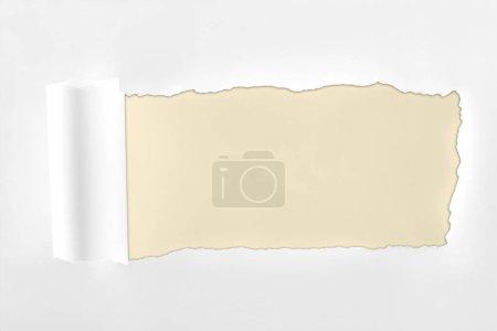 Photo pour Papier blanc texturé déchiqueté avec bord roulé sur fond ivoire - image libre de droit