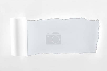 Photo for Ragged textured paper with rolled edge on white background - Royalty Free Image
