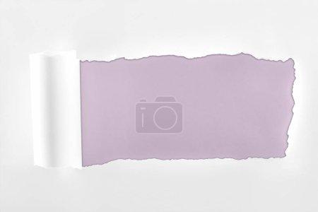 Foto de Papel blanco con textura irregular con borde enrollado sobre fondo púrpura claro - Imagen libre de derechos