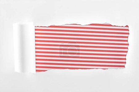 Photo pour Papier blanc texturé Ragged avec bord roulé sur fond rayé rouge - image libre de droit