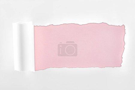 Photo pour Papier blanc texturé déchiqueté avec bord roulé sur fond rose - image libre de droit