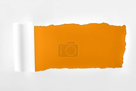 Photo pour Papier texturé déchiqueté avec bord roulé sur fond orange - image libre de droit