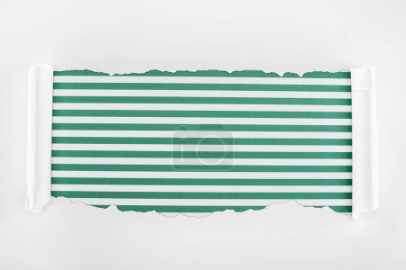 Photo for Ragged textured white paper with curl edges on green striped background - Royalty Free Image