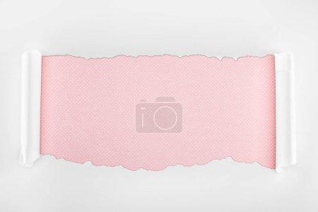 Photo pour Papier blanc texturé Ragged avec des bords de courbure sur le fond rose - image libre de droit