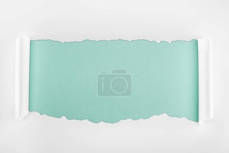Photo for Ragged textured white paper with curl edges on light blue background - Royalty Free Image