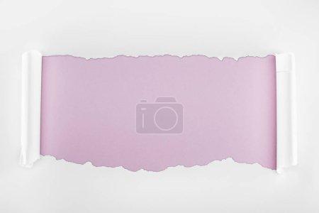 Foto de Papel texturizado blanco rasgado con bordes rizados sobre fondo púrpura claro - Imagen libre de derechos
