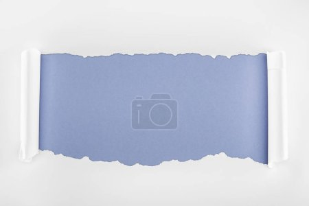 Photo for Ripped white paper with rolled edges on blue background - Royalty Free Image