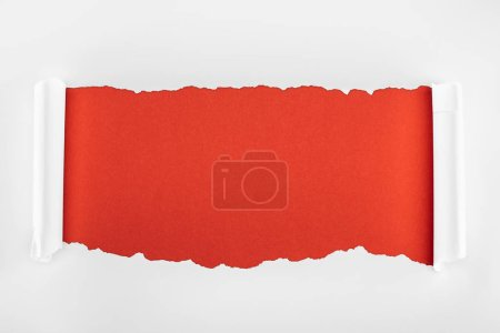 Photo for Ripped white textured paper with curl edges on red background - Royalty Free Image